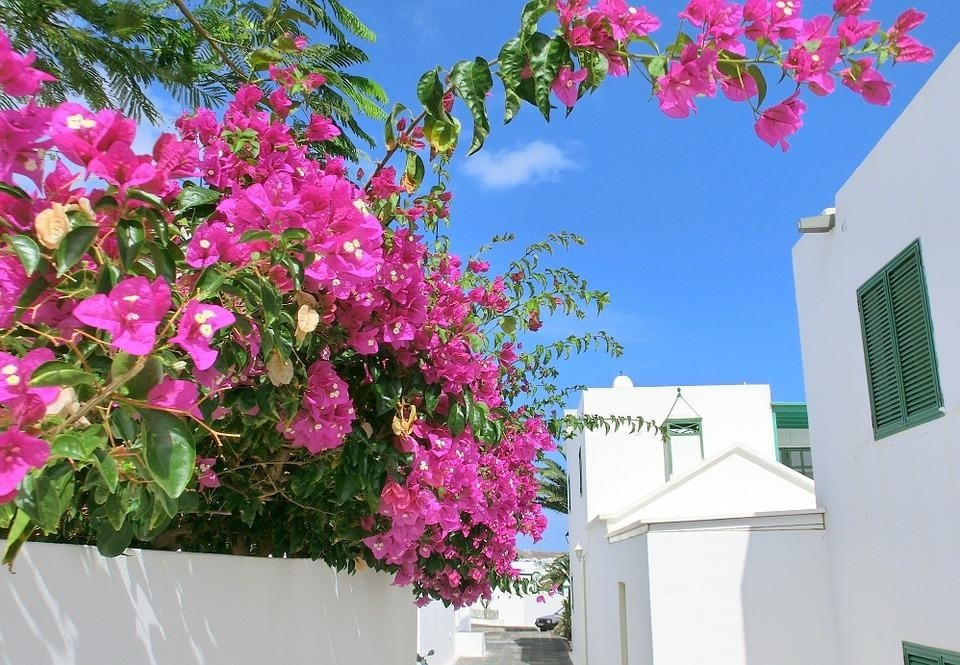 Kanareninsel Lanzarote - wohnen