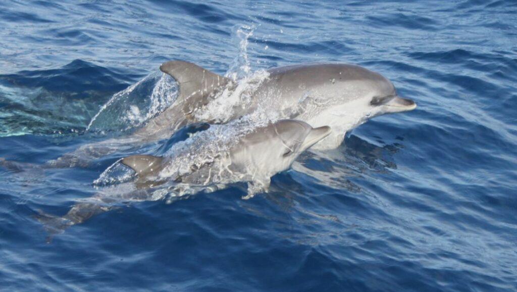 Bootausflüge Lanzarote - Delfinsuche